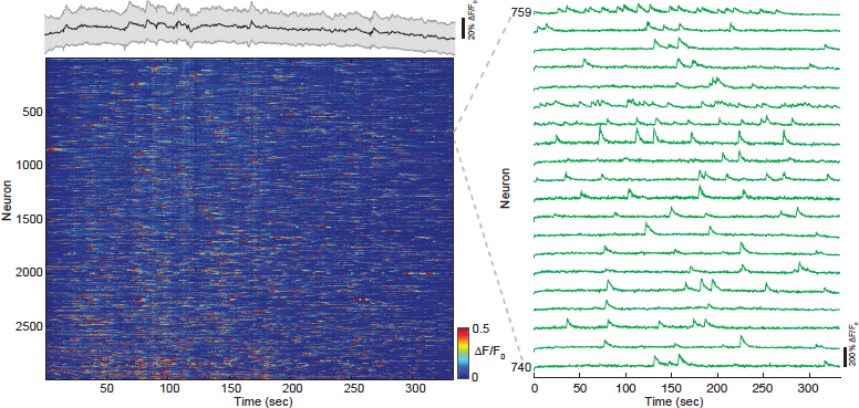 Figure 3: Fast volumetric imaging of Ca2+-dynamics across cortical layers in mouse posterior parietal cortex.